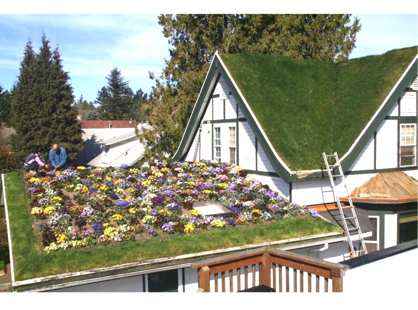 Troy S Green Roof Greenroofs Com
