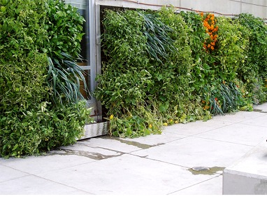 Urban Farming Food Chain – Miguel Contreras Learning Complex Green Wall Featured Image