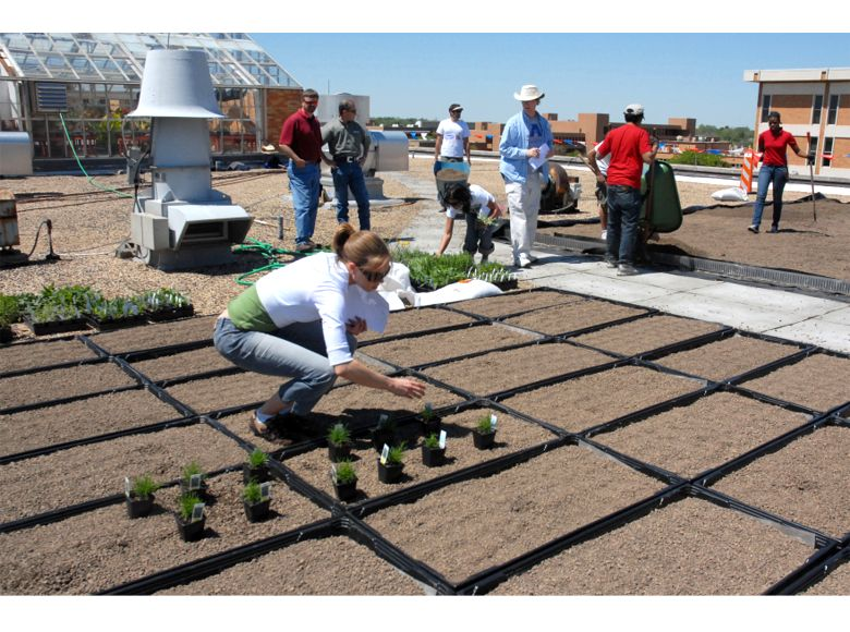 UT Arlington Life Science Center Green Roof Featured Image