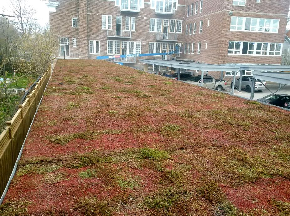 Wells Lofts – First Urbanscape Green Roof Project in Canada Featured Image