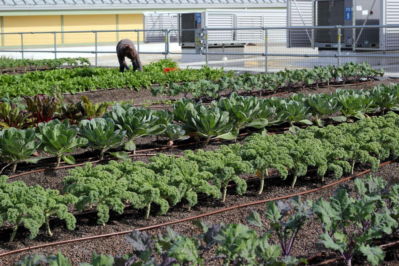 Whole Foods Market Lynnfield Ma Greenroofs Com
