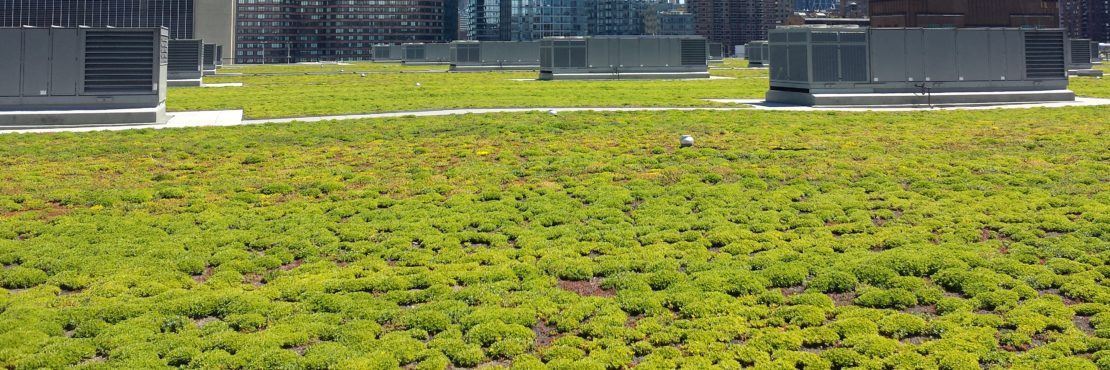 Chatfield Farms Green Roofing Featured Image