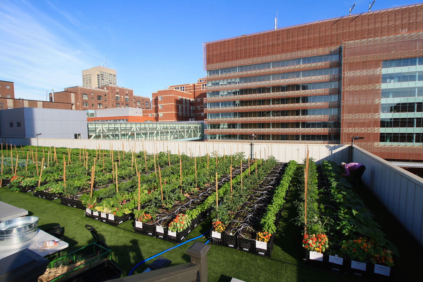 Boston Medical Center Rooftop Farm Featured Image