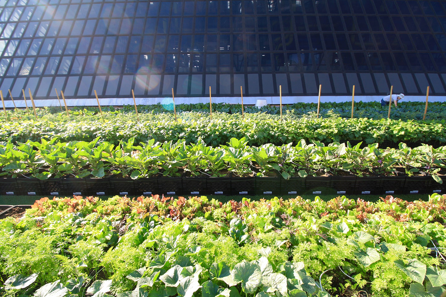Featured Project: Boston Medical Center Rooftop Farm