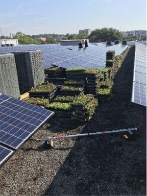 Solar Integrated Green Roof