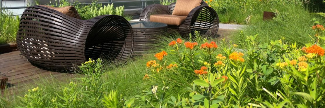 New York Green Roofs Featured Image