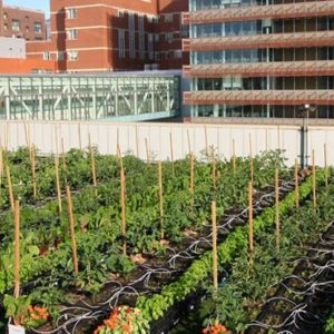 BMC Rooftop Farm