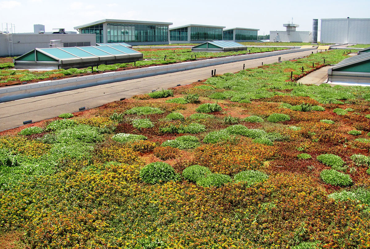 Green Roof Energy Series Part 7