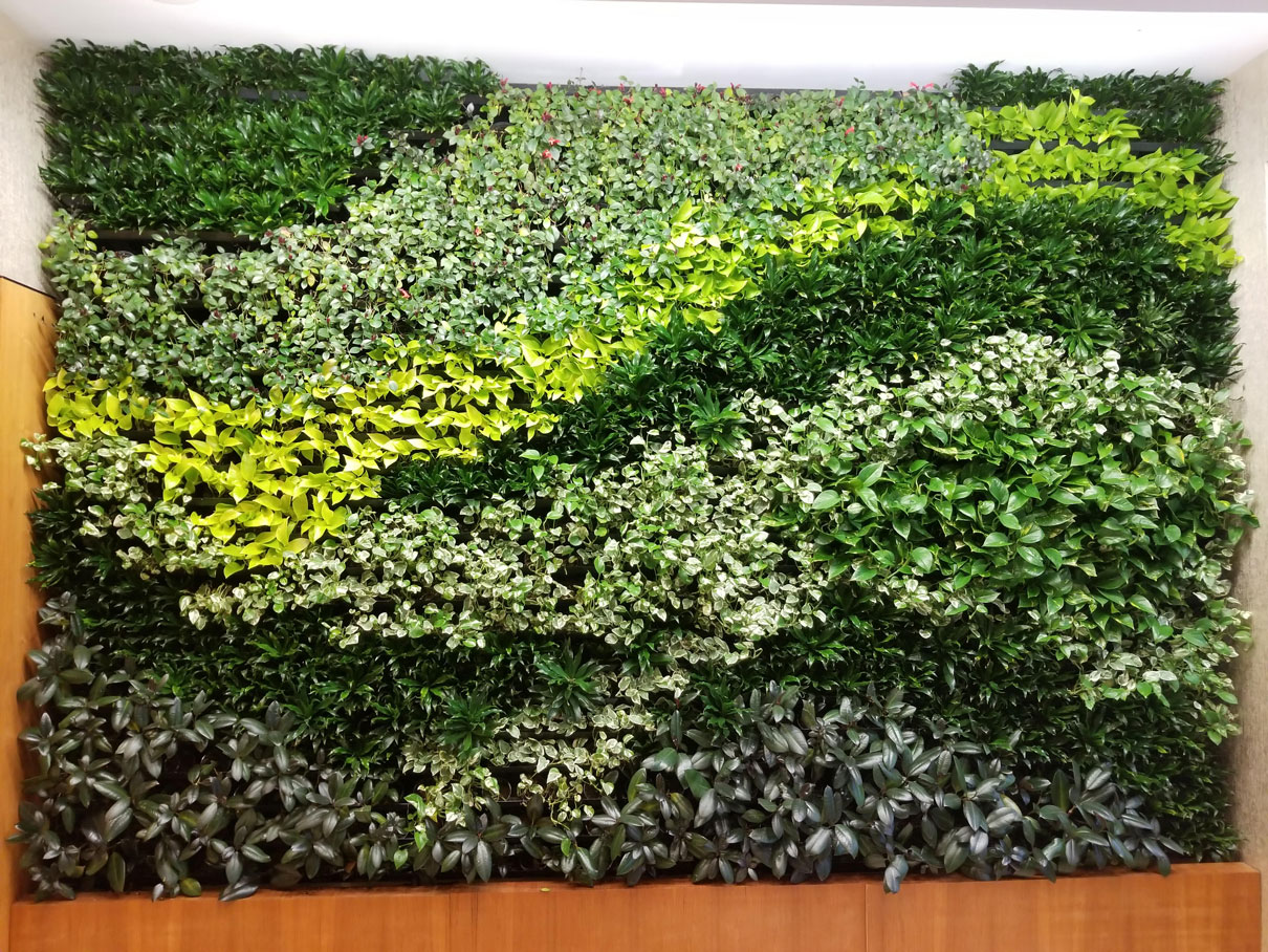 GSky Highlights Unique Living Green Wall Maintenance Program ...
