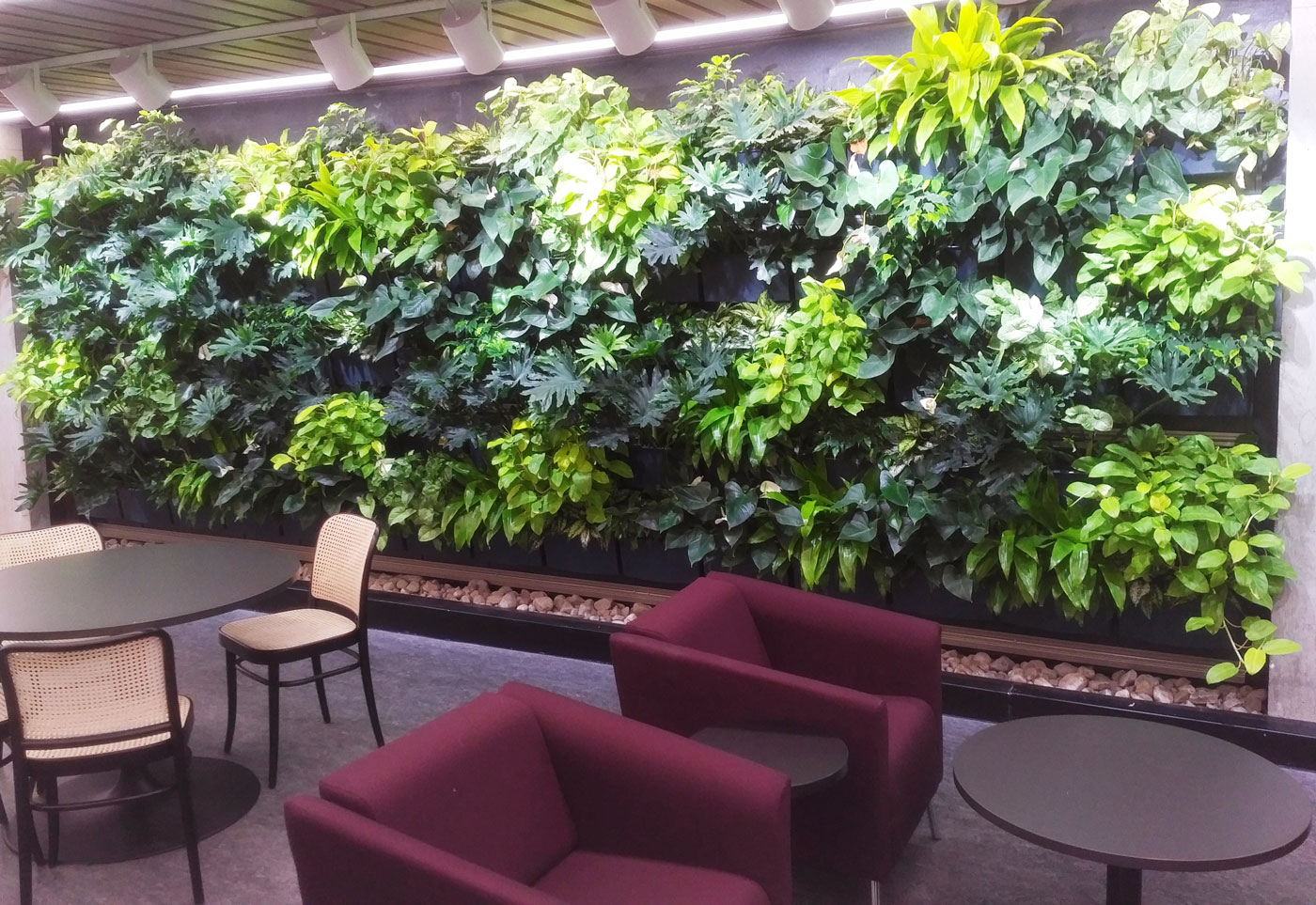Trent University Bata Library Greenwall Featured Image