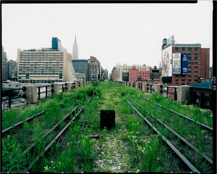 A Comparison of the 3 Phases of the High Line Part 3 - Plantings Discussion