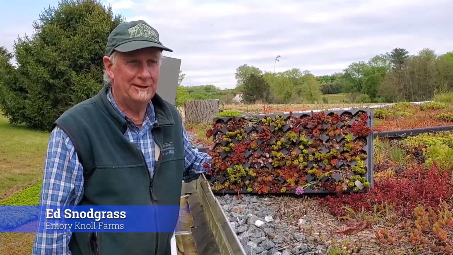 Green Roof Weed Control Using Saturated Steam