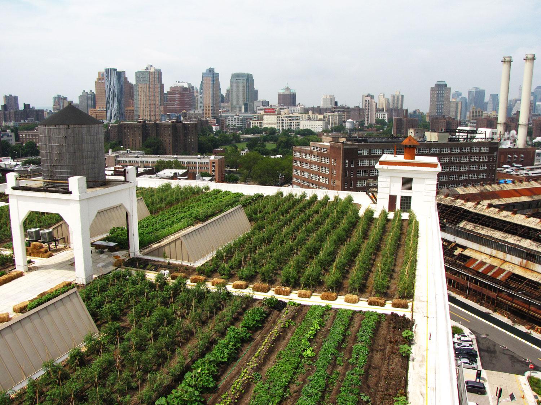 Brooklyn Grange Rooftop Farm #2 at Brooklyn Navy Yard
