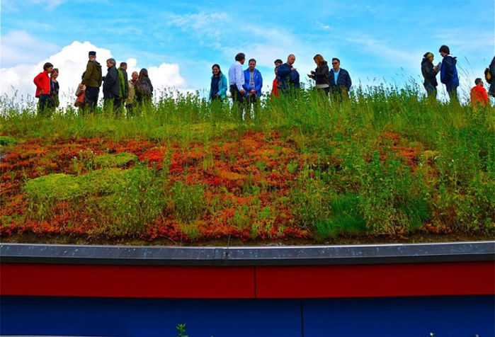 #TBT Nature Green Roofs