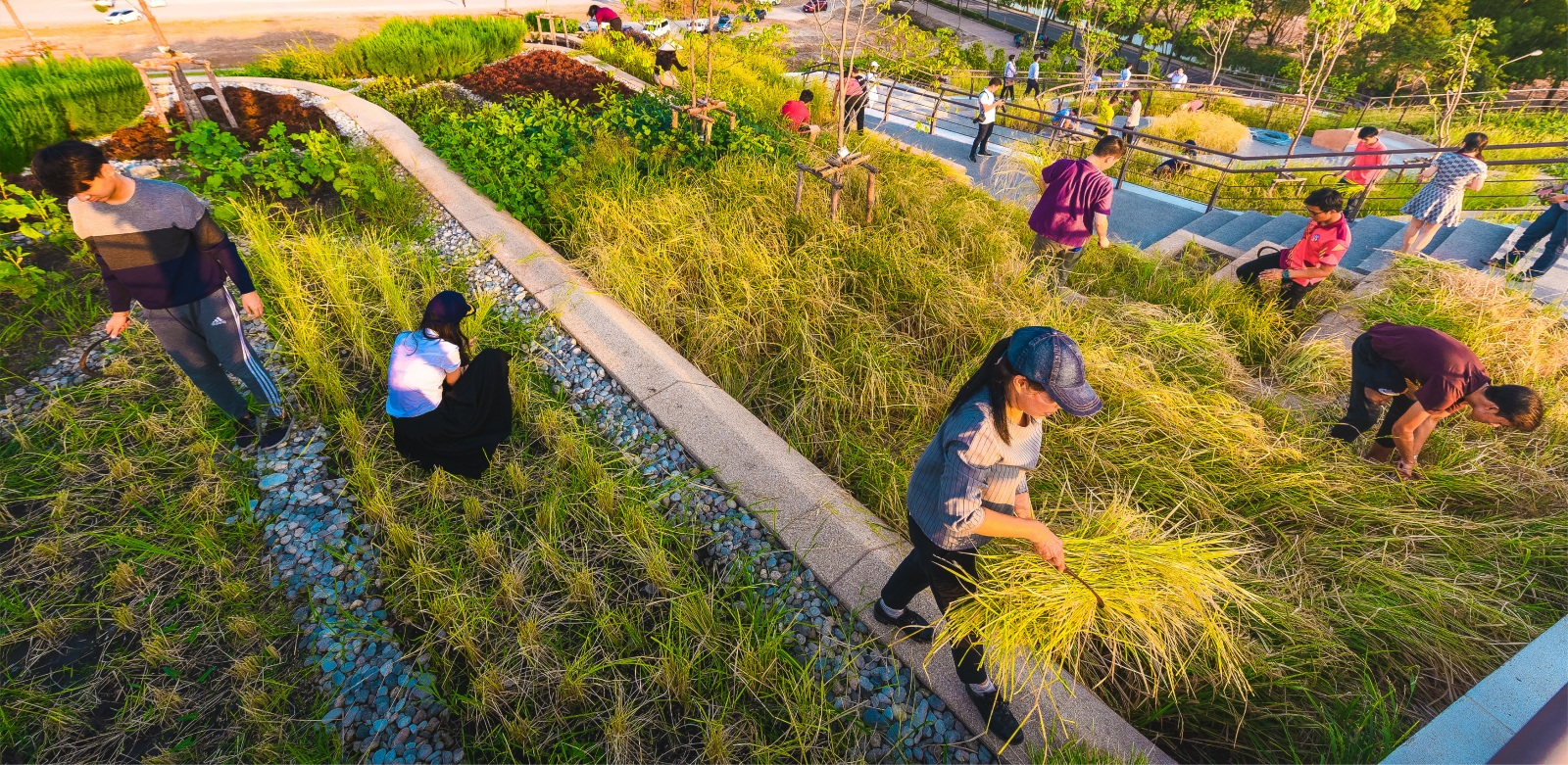 Thammasat University Urban Rooftop Farm