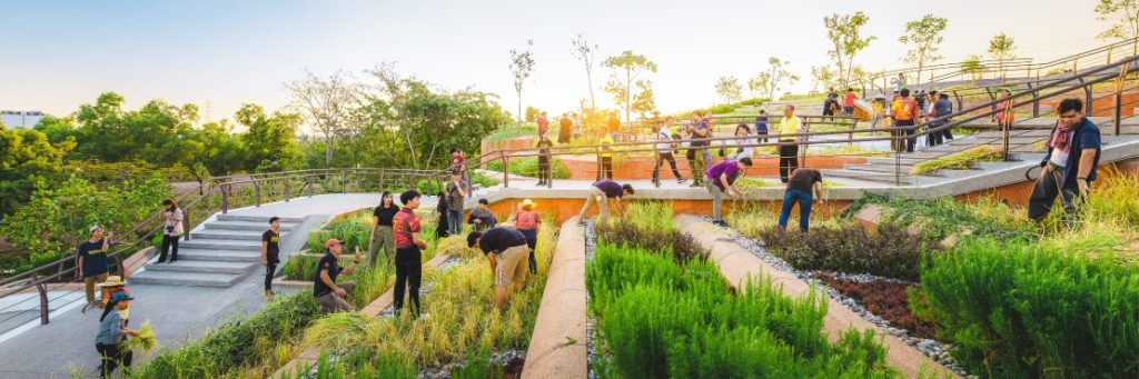 Thammasat University Urban Rooftop Farm