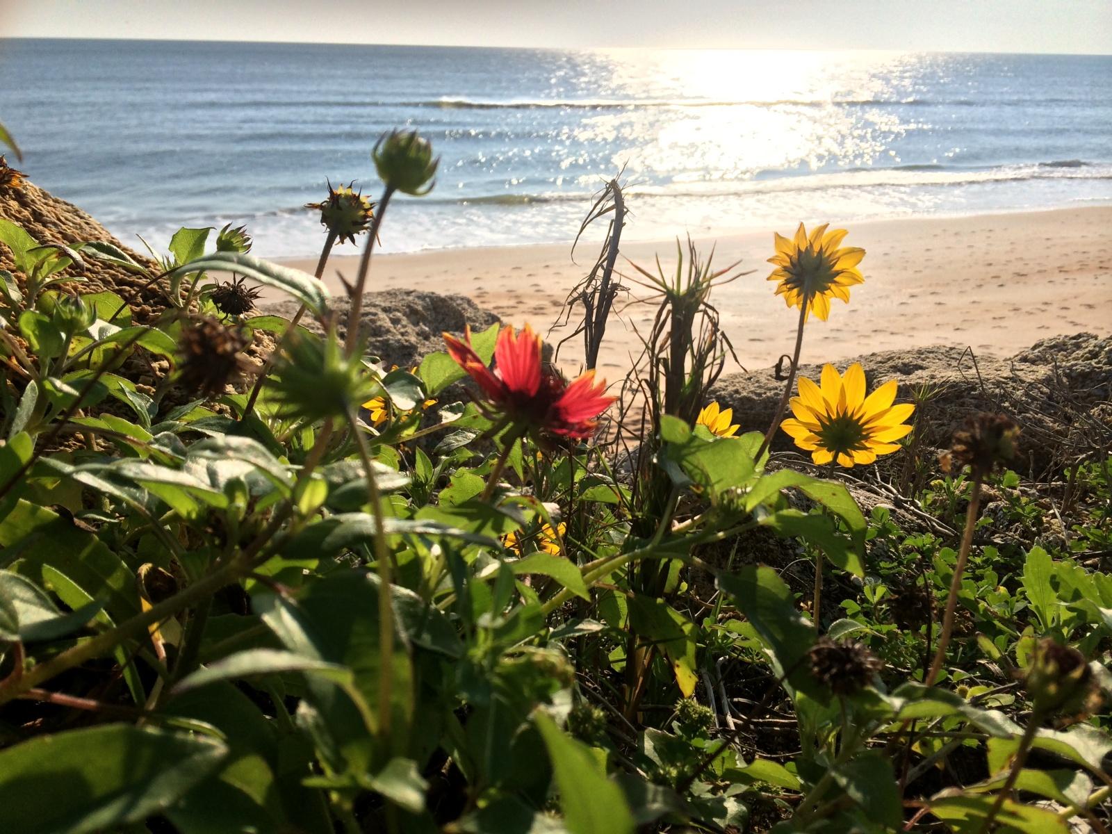 #FBF: Coastal Green Roof Design and Native Plants