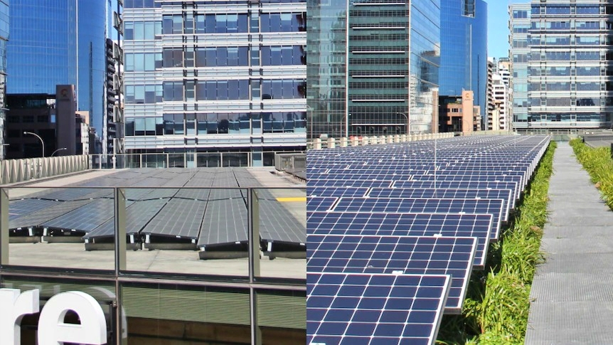 Study Finds Green Roofs Make Solar Panels More Efficient